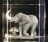 Фигурки слонов