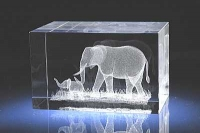 Слониха со слонёнком.